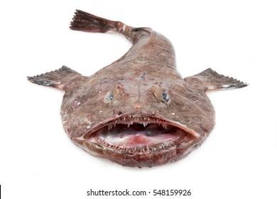 Big Monkfish (Lophius piscatorius) on a white background