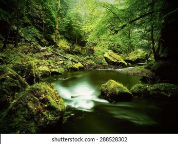 Big mossy sandstone boulders in water of mountain river. . Gulch covered beeches and maple trees with fresh green leaves, rain drops on light green fern.
