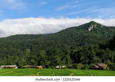 Big mountain in northern of Thailand, homestay and green fields in the rainy season, beautiful scenery and tranquility in the countryside. The green forest of Doi Inthanon National Park