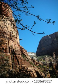 Big Mountain, Small Tree at Zion National Park, USA