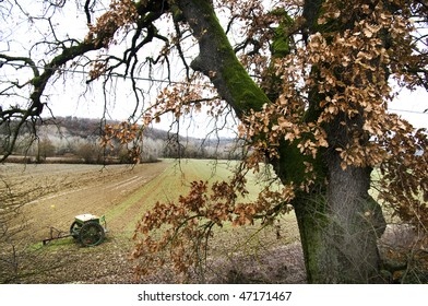 Big oak tree in the tuscan countryside