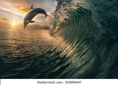 Big ocean breaking wave and sunset dolphin leaping.