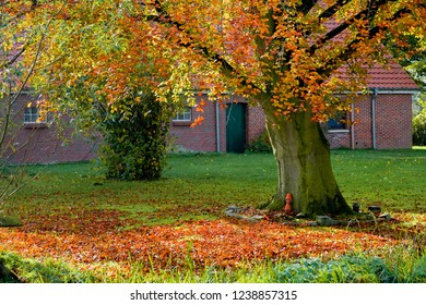 big old beech tree with colorful yellow-brown autumn foliage on green lawn in front of a traditional farmhouse made of bricks, a small funny figure made of clay pots sits in front of the trunk