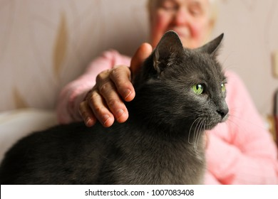 Big old cat sitting on elderly woman's lap. Senior lady pets her blue russian kitty. Grandmother smiling & petting her mature domestic animal, wrinkled hands. Close up, portrait, old friends concept.