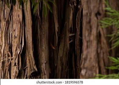 Grosser alter Baum, Nahaufnahme, abstrakter brauner Hintergrund.