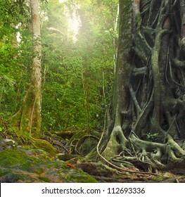 Big old tree trunk with roots in rain forest. Jungle landscape and tropical plants environment