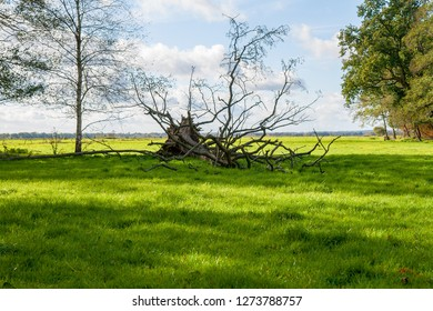 big old uprooted tree lies on a green pasture in front of vivid sky