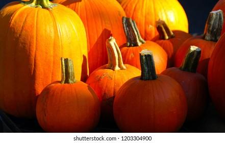 Big orange pumkins from an autumn harvest. Pumkin for halloween concept. Pumkin for sell in fresh market