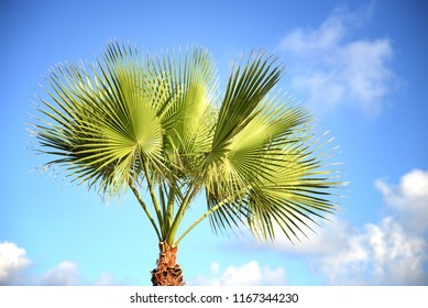 Big palm against a blue sky