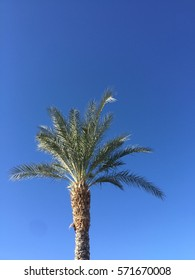 Big Palm Tree blue sky background.