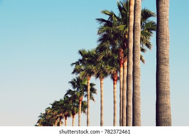 Big palm trees with bright blue sky in the background