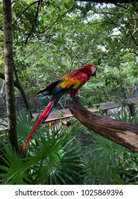 Big parrot from jungles