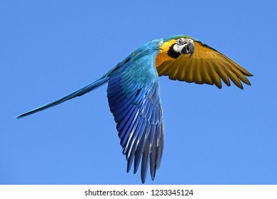 Big Parrot macaw, nature bird, colourful macaw bird parrot