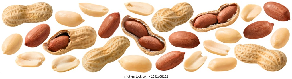 Big peanut set isolated on white background. Groundnuts shelled and in nutshell. Package design element with clipping path