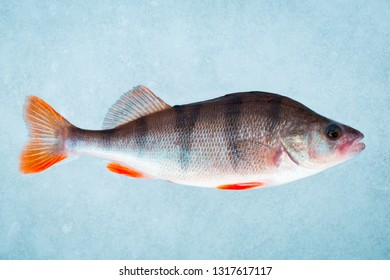 Ice Fishing Perch Images, Stock Photos & Vectors | Shutterstock