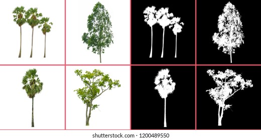 big picture of tree isolated on white background with alpha channel for dicut easy to use