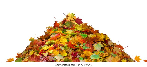 Big pile of autumn colored leaves isolated on white background.A heap of different maple dry leaf.