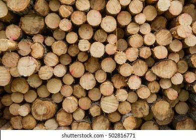 big pile of firewood