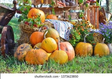 A big pile of ripe pumpkins on the cart and the grass on Halloween