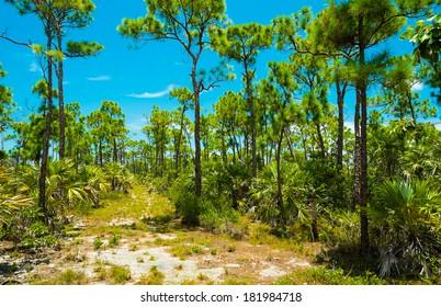 Big Pine Key deer refuge located in the Florida Keys.