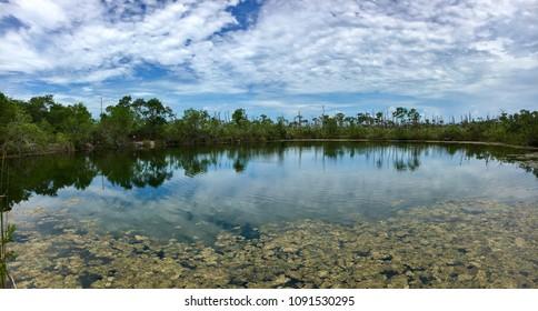 Big Pine Key, Florida, USA - July 22, 2016: Big Pine key in Florida with typical swamp