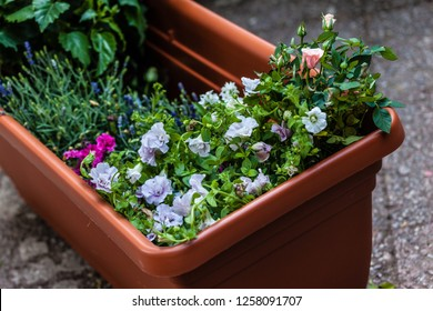 a big plastic planter full of little flower