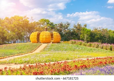 Big pumpkin is made from corn at the big farm at Jim Thompson farm. Beautiful colorful flowers field at Jim Thompson farm at Nakornratchasima, Korat, Thailand
