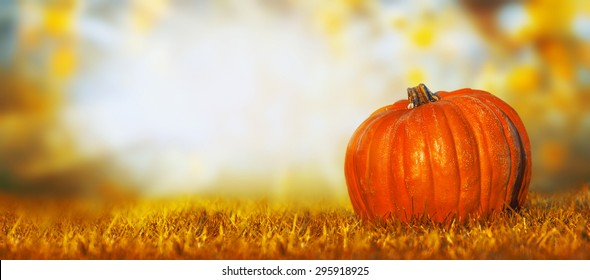 Big pumpkin on lawn over autumn nature background, banner for website