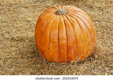 Big Pumpkins and Fallen Leaves