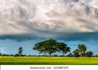 Big rain clouds are low to the ground over the rice field, rainy season in Thailand