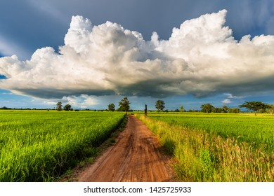 Big rain clouds over the dirt road in the rice field, countryside and rainy season in Thailand