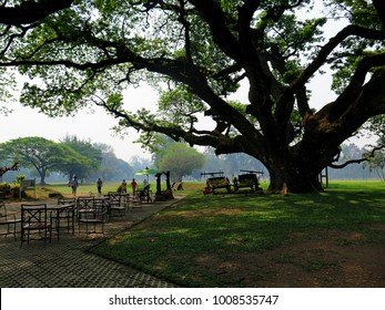 Big rain tree or East Indian Walnut (Leguminosaeor) in the garden of golf court, lawn mowers, some people around the shading of tree, environmentally friendly, love earth day concept