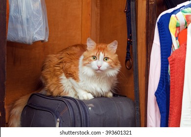Big red cat on suitcase in home closet