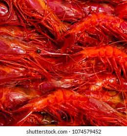 Big red prawns