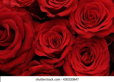 Big red roses in a bridal bouquet