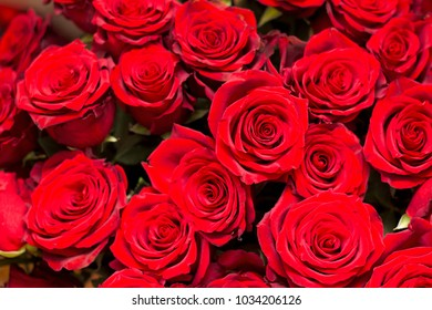a lot of big red roses closeup