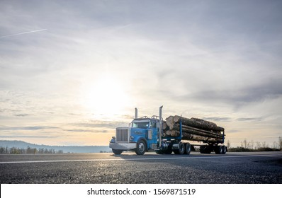 Big rig classic powerful American blue day cab semi truck with vertical chrome exhaust pipes transporting cut trees wood logs on the special semi trailer driving on the road with sunset