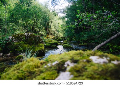 Big rock covered in moss standing in clear stream in a green forest close to the water spring