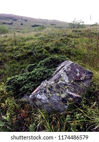 Big rock with a natual background un moss.