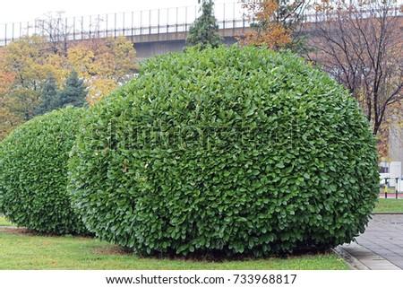 big round green bush garden - Bush Garden
