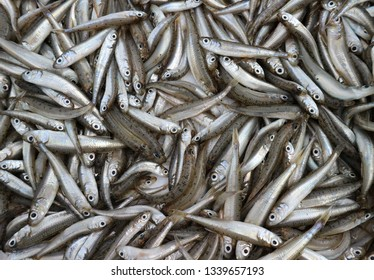 Big scale sand smelt,  Atherina boyeri is the scientific name, very small fish used  in gastronomy mainly fried with wheat flour in oil. Food background