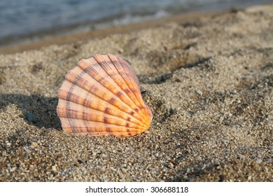 Big sea shell on the beach