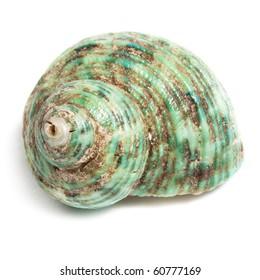 Big sea shell on white background