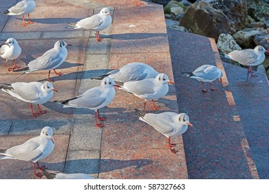 the big seagulls on the wall