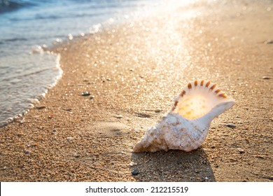 Big seashell on the sand on the beach in the back-light of sunset, background, close up