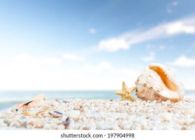Big seashell and starfish on ocean beach against sunny horizon.