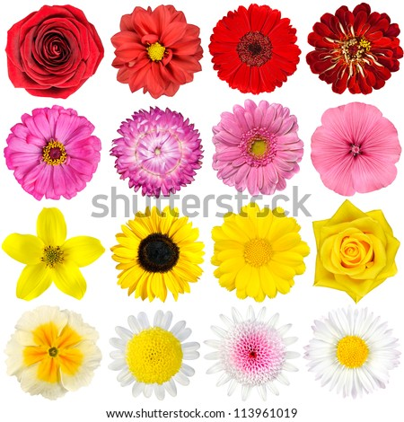 Big Selection Various Flowers Isolated On Stockfoto Jetzt