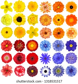 Big Selection of Various Orange, Purple, Blue and Red Flowers Isolated on White Background
