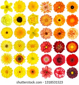 Big Selection of Various Orange, Purple and Red Flowers Isolated on White Background