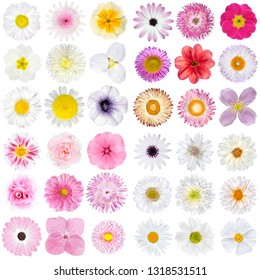Big Selection of Various Pink, and WhiteFlowers Isolated on White Background